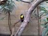 Zoo de Berlin